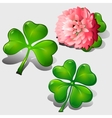 Clover leaves and pink flower vector image
