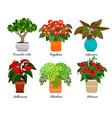 house flowers and indoor flowerpots vector image