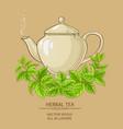 melissa herbal tea vector image
