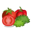 tomatoes and letuce fresh vector image