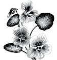Flower of nasturtium vector image vector image