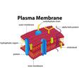 Diagram with plasma membrane vector image
