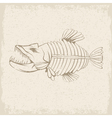 grunge design template of aggressive tropical fish vector image