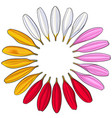 set of hand drawn white pink yellow red gerbera vector image