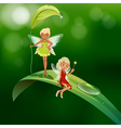 Two playful fairies vector image vector image