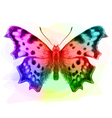 Butterfly Iridescen colours vector image