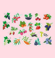 set of berry stickers vector image