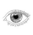 woman eye hand drawn sketch vector image