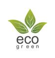 eco green leaf logo vector image