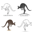 kangaroo silhouettes on the white background vector image