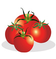 Tomatoes group vector image