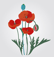 poppyes vector image