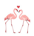 Flamingo birds couple heart love symbol isolated vector image