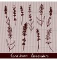 Hand drawn lavander set vector image