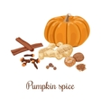Pumpkin spice vector image