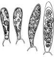 spores vector image
