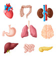 cartoon human internal organs set vector image