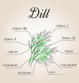 nutrients list for dill vector image