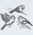 Tits sparrows and bullfinches on branch vector image