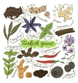 Colorful insulated set of local hand drawn herbs vector image