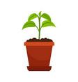 houseplant in flower pot vector image