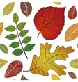 Leaves doodle vector image