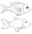 fish outline drawing vector image