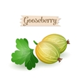 bright gooseberry plums vector image