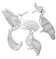 Coloring page with Bird Rhinoceros Hummingbird vector image