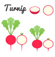 turnip vector image