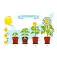 investments process with money tree growing vector image