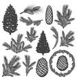 vintage coniferous tree elements set vector image