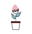 potted flower natural bulb growth plant decoration vector image