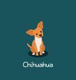 an depicting chihuahua dog cartoon vector image