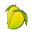Mango design on white background vector image