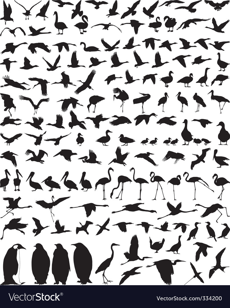 Waterfowl vector