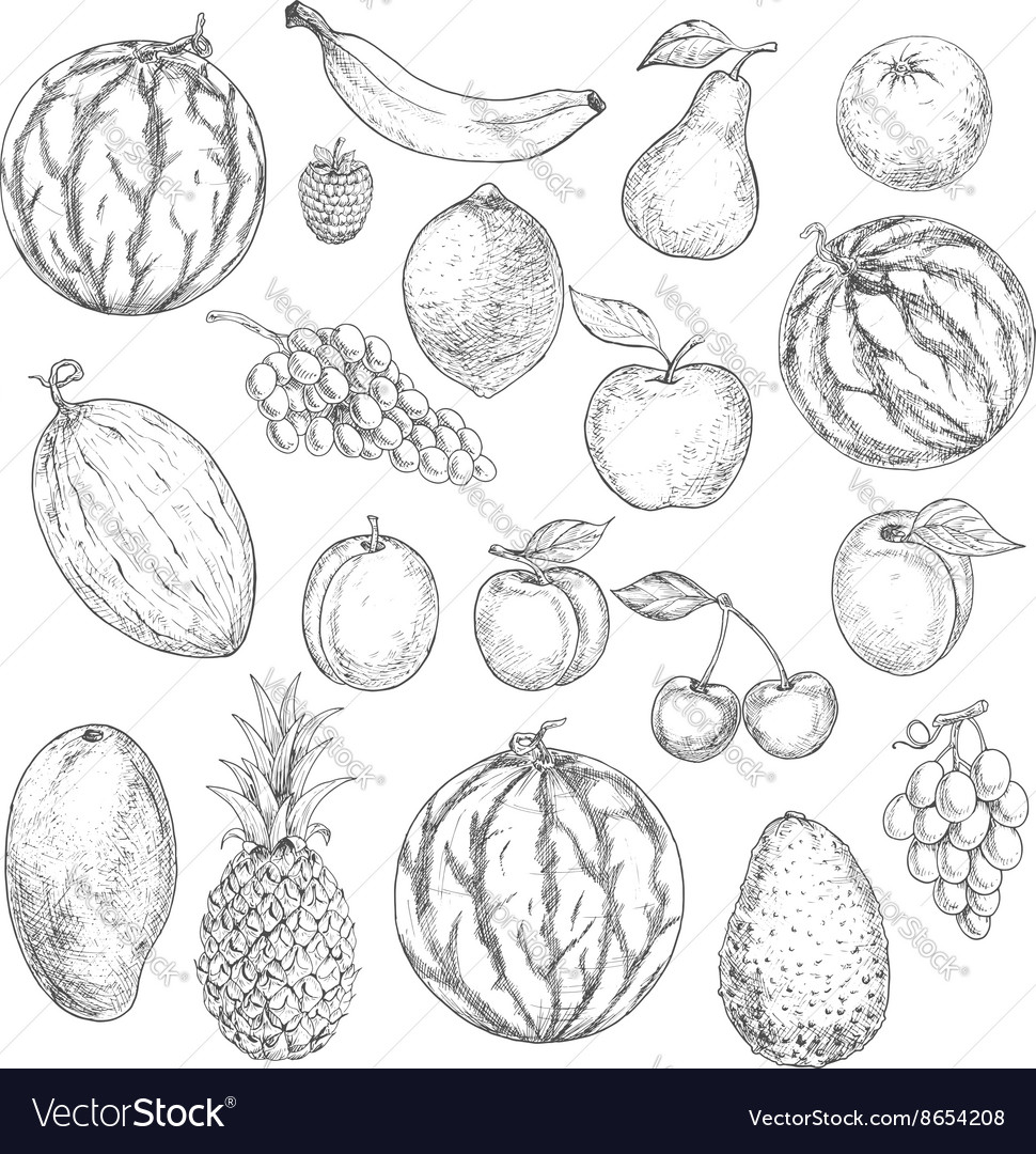 Delicious fresh harvested summer fruits sketches vector