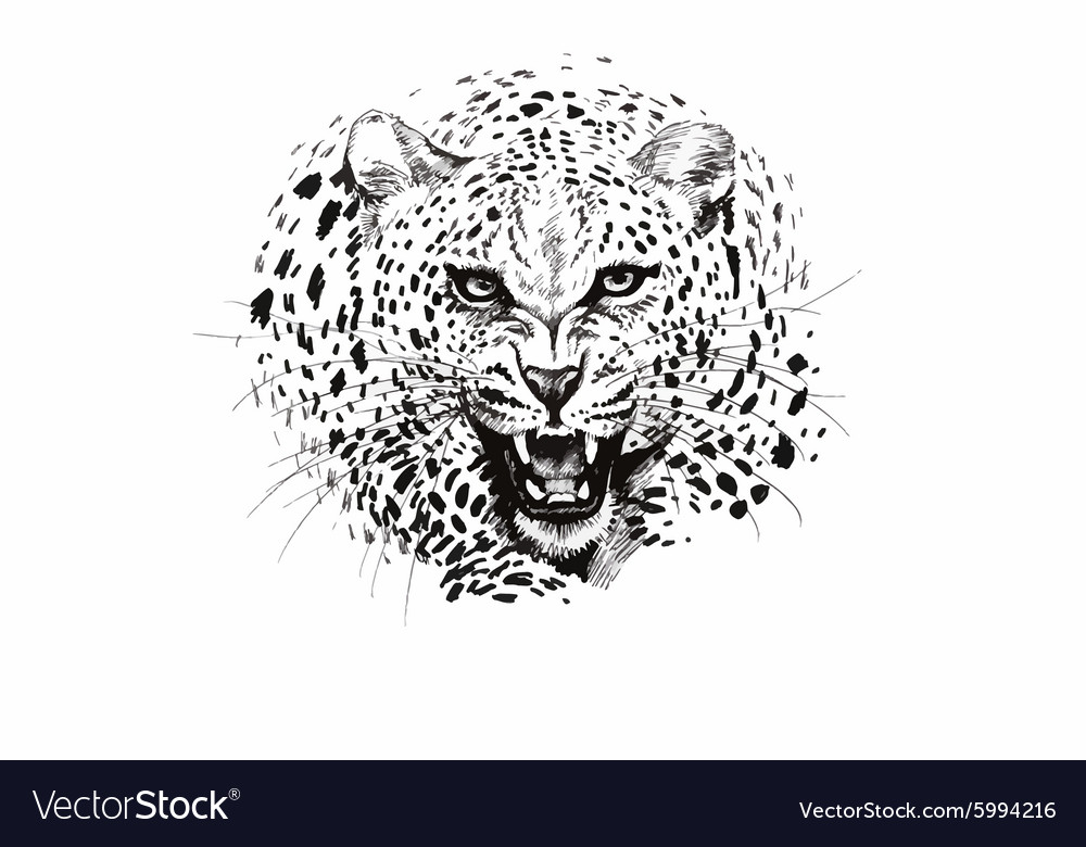 Angry leopard muzzle black and white sketch vector