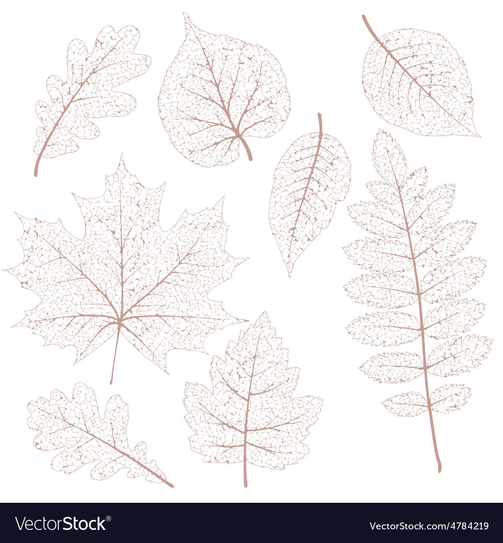 Dried leaves set eps 10 vector