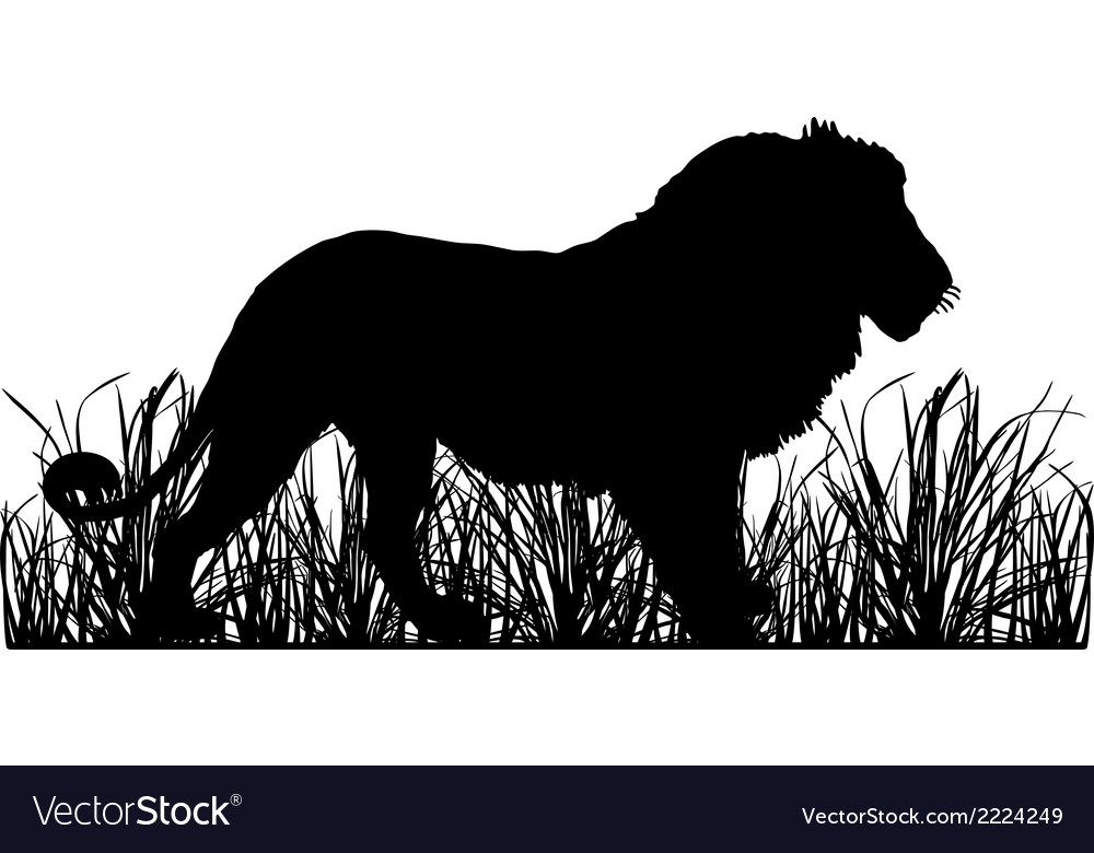 Lion in savanna vector