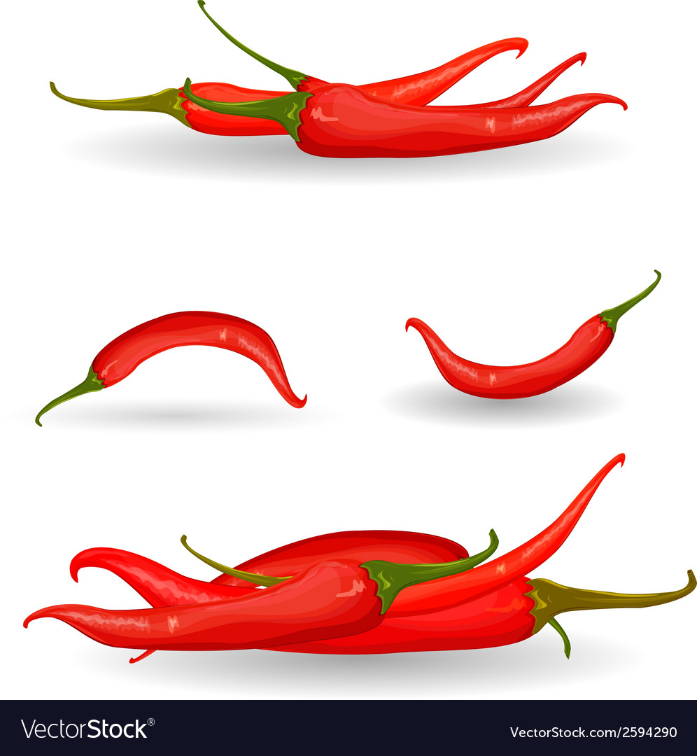 Collection red chili pepper vector