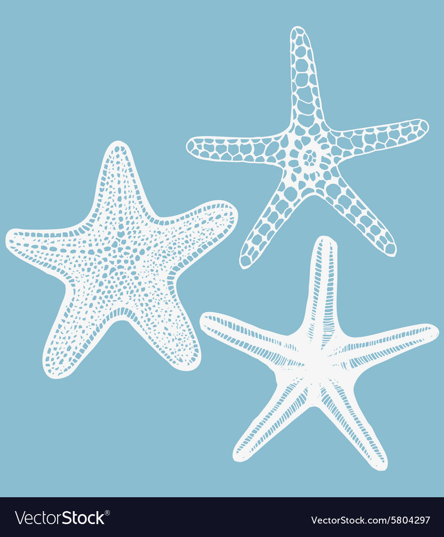 Set of handdrawn starfishes vector