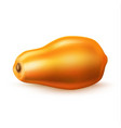 realistic 3d papaya pawpaw isolated vector image