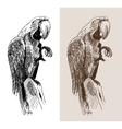 original artwork parrot black sketch drawing bird vector image