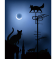 cats on the roofs in the night sky vector image vector image