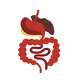 human digestive system isolated icon vector image