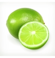 Lime citrus fruit icon vector image