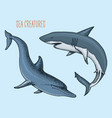 sea creature dolphin and white shark engraved vector image