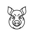 image of swine or pig head vector image