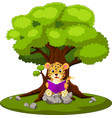 leopard reading book and sitting on the stone vector image
